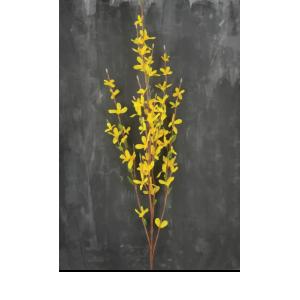 Forsythia Place